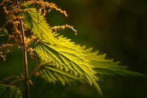 Jarné bylinky