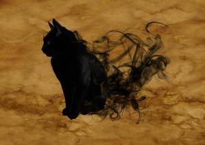 Mačka - jej zvláštne a nadprirodzené schopnosti